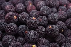 Свежий красный bayberry стоковые фотографии rf
