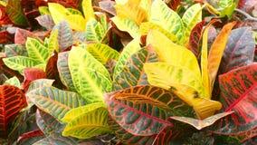 Свежий красочный крупный план листьев Стоковое фото RF