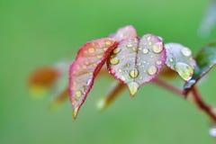 Свежий & красочный Стоковая Фотография RF