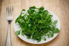 свежий кресс-салат Стоковые Изображения
