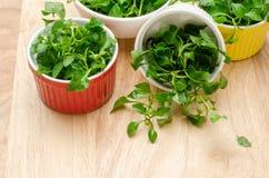 свежий кресс-салат стоковые фотографии rf