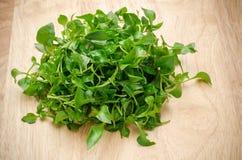 свежий кресс-салат стоковое изображение rf