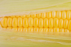 Свежий крупный план Corns Стоковое фото RF