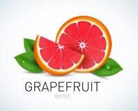 Свежий кусок грейпфрута при листья изолированные на белой предпосылке иллюстрация штока