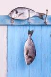 Свежий лещ моря висит headlong на крюке Стоковые Изображения RF