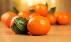свежий мандарин листьев Стоковое Изображение RF