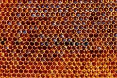 Свежий мед в клетках, предпосылка сота естественная Стоковая Фотография