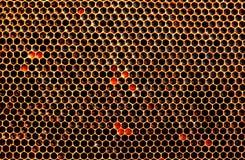 Свежий мед в клетках, сот Стоковое Фото