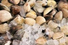 Свежий моллюск от моря на стойле еды Стоковые Изображения RF