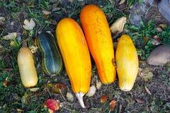 Свежий молодой цукини 5 желтого цвета и зеленый цвет лежат на g Стоковые Изображения