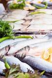 Свежий морской окунь на дисплее Стоковое Изображение