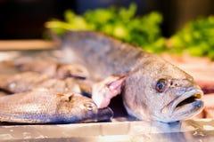 Свежий морской окунь на дисплее Стоковая Фотография