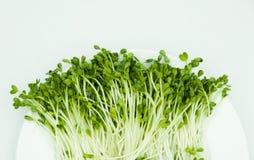 свежий овощ Стоковые Фотографии RF