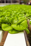 Свежий овощ Стоковые Фото