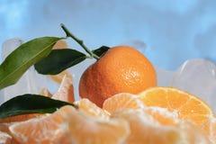 Свежий оранжевый плодоовощ мандарина с зелеными листьями замерзается на холодном голубом льде Стоковая Фотография