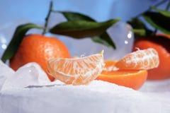 Свежий оранжевый плодоовощ мандарина с зелеными листьями замерзается на холодном голубом льде Стоковое Изображение RF