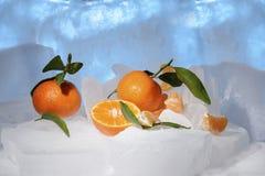 Свежий оранжевый плодоовощ мандарина с зелеными листьями замерзается на холодном голубом льде Стоковое фото RF