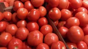 Свежий, органический, рука выбрала зрелые томаты для продажи на рынке фермы обочины видеоматериал