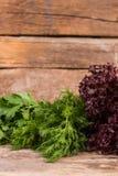 Свежий органический укроп, петрушка, и фиолетовый салат стоковое фото