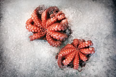 Свежий осьминог в льде Стоковые Фото