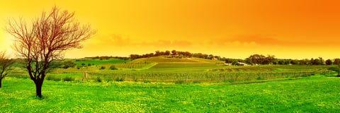 свежий панорамный виноградник Стоковые Изображения RF