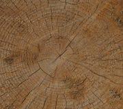 Свежий пень дерева отрезка Стоковая Фотография