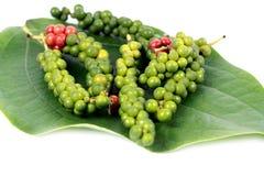 свежий перец листьев Стоковая Фотография