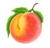свежий персик Стоковые Изображения RF