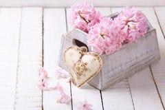 Свежий пинк цветет гиацинты в коробке и декоративном сердце Стоковые Фотографии RF