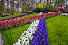 Свежий предыдущий пинк весны, пурпур, белые шарики гиацинта Flowerbed с гиацинтами в парке Keukenhof, Lisse, Голландии, Нидерланд Стоковая Фотография RF
