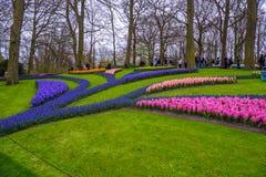 Свежий предыдущий пинк весны, пурпур, белые шарики гиацинта Flowerbed с гиацинтами в парке Keukenhof, Lisse, Голландии, Нидерланд Стоковые Фото