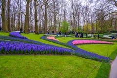 Свежий предыдущий пинк весны, пурпур, белые шарики гиацинта Flowerbed с гиацинтами в парке Keukenhof, Lisse, Голландии, Нидерланд Стоковые Изображения RF