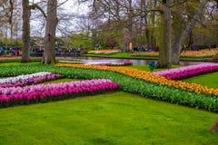 Свежий предыдущий пинк весны, пурпур, белые шарики гиацинта Flowerbed с гиацинтами в парке Keukenhof, Lisse, Голландии, Нидерланд Стоковое Изображение RF