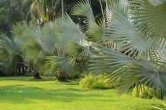 Свежий природный парк с украшенными пальмами стоковые фото