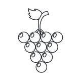 Свежий план плодоовощ виноградины иллюстрация вектора