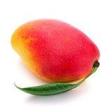 Свежий плодоовощ мангоа с зеленым цветом выходит на белую предпосылку Стоковые Изображения