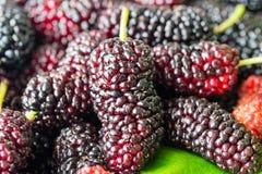 Свежий плодоовощ шелковицы Стоковые Фото
