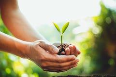 Свежий расти зеленого растения, штриховки роста дерева в природе и красивое освещение утра стоковые изображения rf