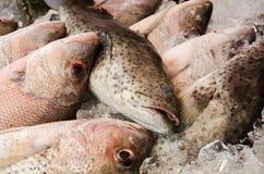 Свежий рыбный базар на пляже Thaland Rawai Стоковые Изображения RF
