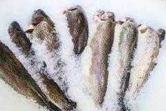 свежий?? рыбы Стоковое Фото