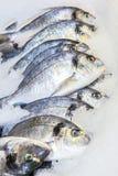 свежий?? рыбы Стоковые Фото