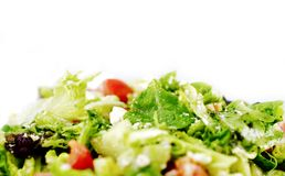 Свежий салат зеленых цветов Стоковая Фотография