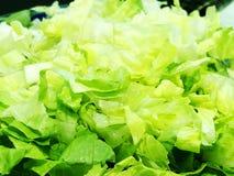 свежий салат листьев Салат лист или зеленый салат в огороде Стоковые Фотографии RF