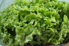 свежий салат листьев стоковое изображение rf