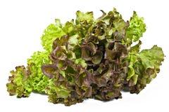 свежий салат над белизной Стоковые Изображения