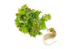 Свежий салат на белой предпосылке Стоковые Изображения RF