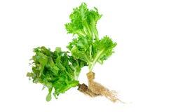 Свежий салат на белой предпосылке Стоковые Фотографии RF