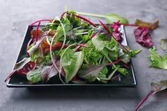 свежий салат плиты Стоковое Изображение RF