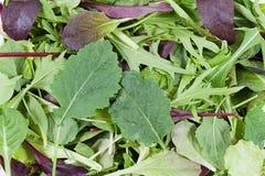 свежий салат смешал Стоковое фото RF