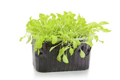 Свежий салат в изолированном контейнере Стоковое Изображение RF